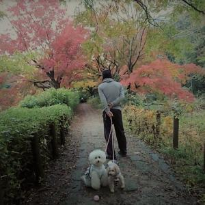 ✿雨上がりの紅葉散歩♪✿