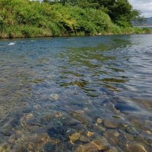 魚野川で取材!