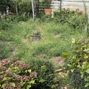 ようやく夏草退治で、ブツ草と。
