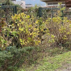 12月の庭作業