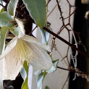 次なる冬花