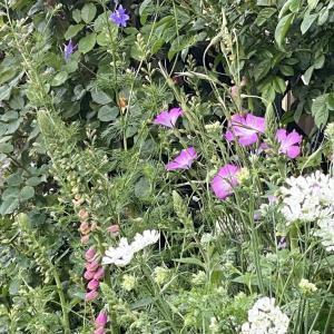 オルレアの庭 5月上旬~6月上旬
