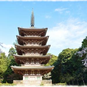 京都の桜を堪能!原谷苑、醍醐寺