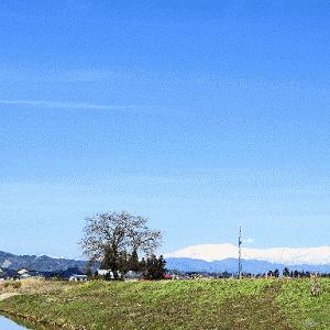 春 春 春 嬉しい春の散歩道