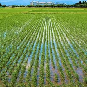 会津二十三万石 緑の圃場広々と