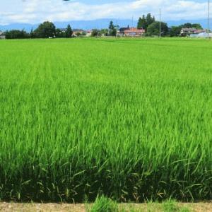 鮮やかな緑の圃場の遠く村見えて
