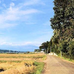 村道の秋の散歩を楽しみました