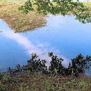 暑いけど空を映して涼しい池がありました