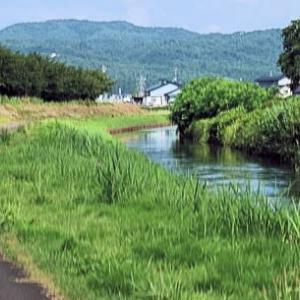 河川敷公園の緑が美しい