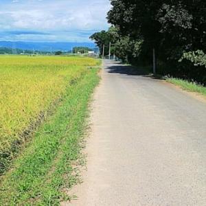 広々とした村の散歩道
