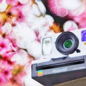 ポラロイドと桜
