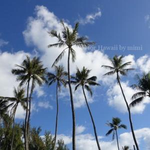 年内のハワイ旅行は無理?