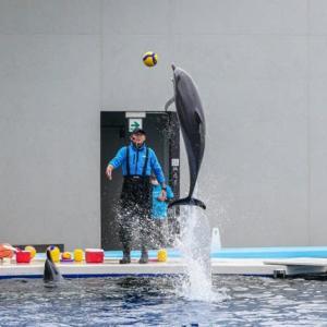 四国水族館のイルカ
