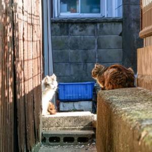 瀬居島の猫