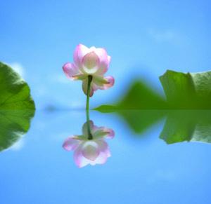 竹内結子さん、ご冥福をお祈りいたします。