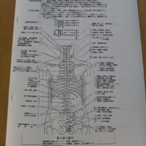 自分の身体・脊椎を知ってもらいたい