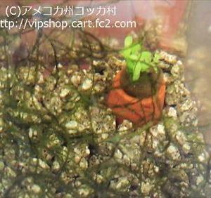 水質が変わった時のメダカのサイン ★ 丈夫で増える水草 アクアリウム