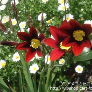 庭花 新緑の季節へGO