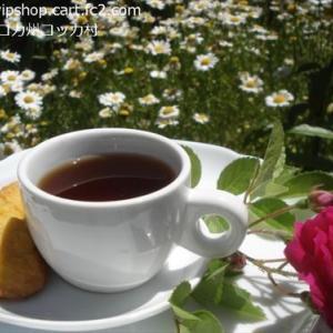 ガーデニング 薔薇の季節と家庭菜園