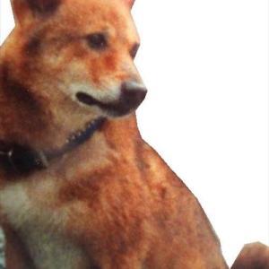 お盆のお墓参り 柴犬の本気のホリホリ