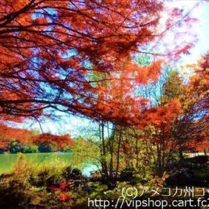 紅葉狩り 錦織りなすイロハモミジ