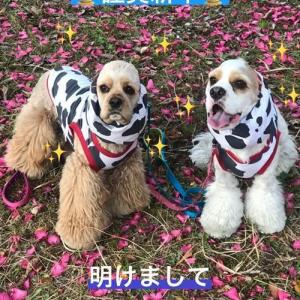 かわいい丑コッカー ★七草粥の日