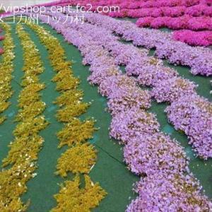 エアコン工事と室内消毒のコツ ★ハナミズキ開花