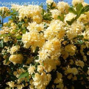 庭花 ツツジ満開と薔薇の季節スタート