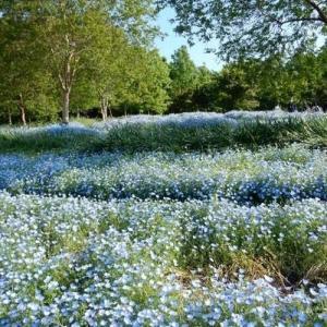 天と地を同じ色に染めるお花満開