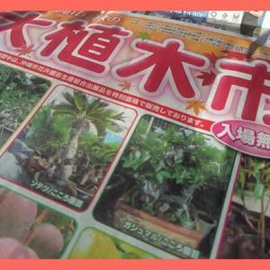 入場無料 沖縄市秋の大植木市 2019