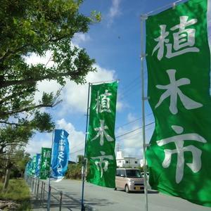 お散歩日和♪沖縄市農民研修センター前 特設会場