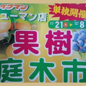 ニューマン店さんにて果樹・庭木市(2019年11月21日~12月8日)