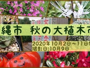 2020年沖縄市秋の大植木市の紹介動画作りました♪