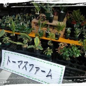 第9回 南のまち 植木・園芸市 in メイクマン豊見城店さん 10月25日午後5時まで★