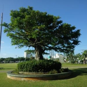理事会のみ林の如く活動する日。年末謝恩大植木市2020☆中部広域グリーンフェスタ12月4日~12月13日♪