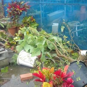 台風6号 沖縄本島 うるま市塩屋の畑