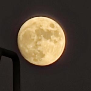 月見て花見て一杯