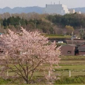 道の駅神戸フルーツ・フラワーパーク大沢3