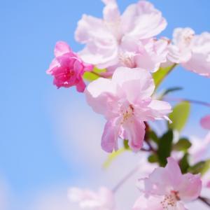 【募集】春のロケーション&桜フォト撮影会開催