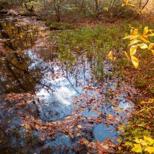 蔦温泉 ⑥瓢箪沼