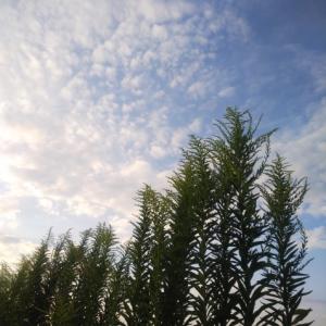 白い塀と植物…☆