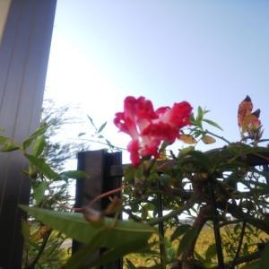 庭で秋を満喫♡