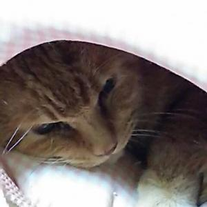 飼い主さん急逝の猫ちゃんたち里親様募集
