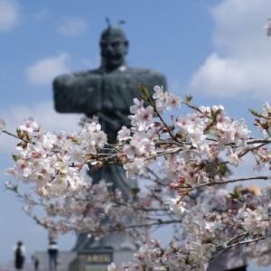 令和2年の桜と弥五郎どん 20200405