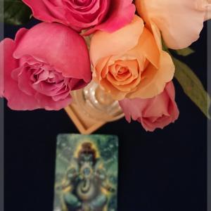 薔薇の存在感