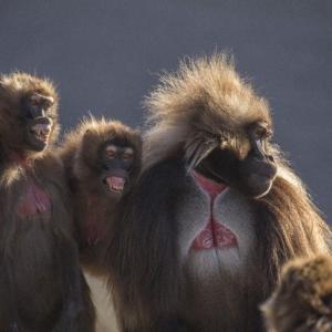 人間はお猿さん以下ですか?(¯―¯٥)(笑)
