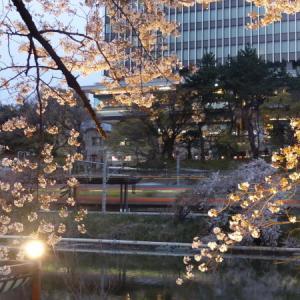 外堀通りの夜桜と中央線 点描