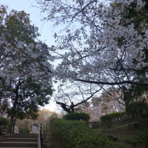 2020 多摩川台公園 桜風景 点描