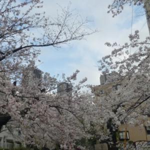 2020 川崎 今井橋 桜風景 点描