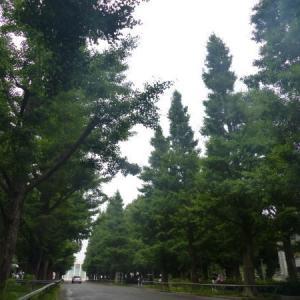 横浜 日吉 キャンパス点描